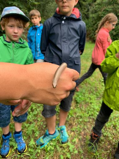 Frösche, Libellen und Ringelnattern